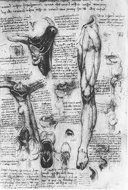 Leonardo da Vinci 1452 - 1519 Anatomical study Larynx and leg.