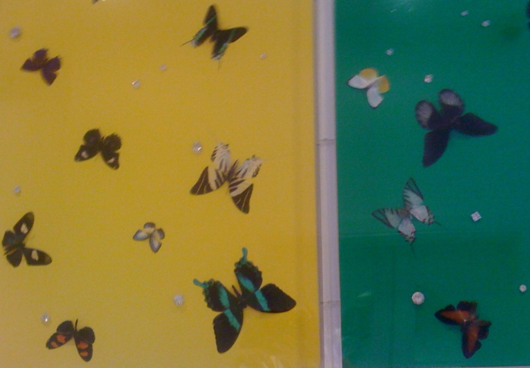 Butterfly Colour Painting.